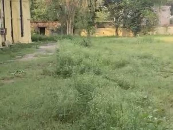 Kapurthala Forestation Project by The Punjab Club