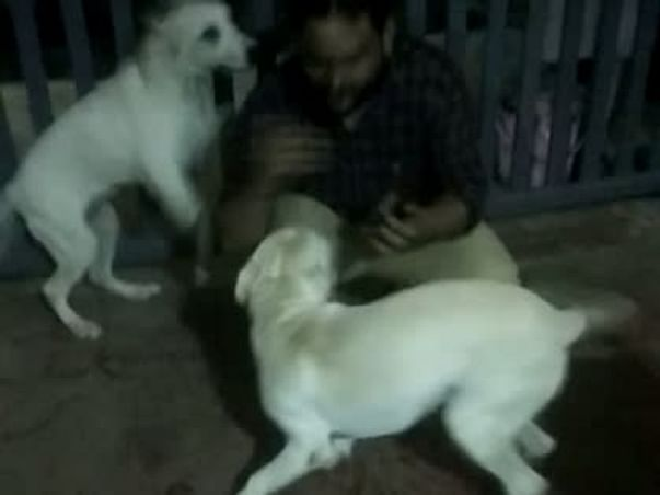 Food , Care and Shelter for Stray Dogs .