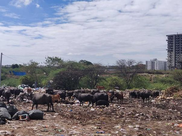 Landfill to Garden - A Green Initiative