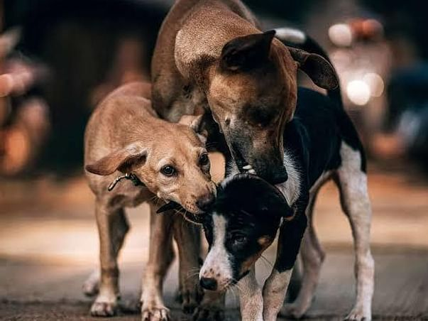 Help Sella Help Stray Dogs