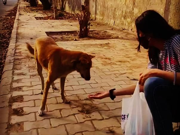 Help us feed the voiceless 🙌🐶