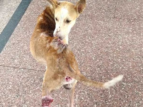 Support & Help For Stray Dogs