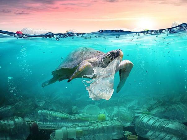 Replacing Plastic Bags For Jute Ones, For Vendors