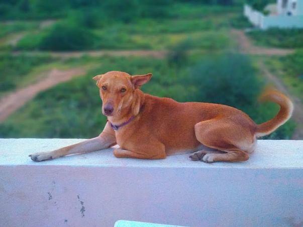 Save Dog Bhairav To Live