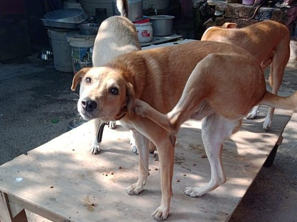 Medi-Aid For Stray Dogs