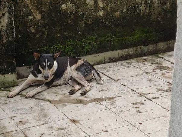 Please HELP Stray Dogs