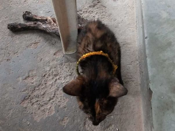 A Stray Cat With A Broken Backbone Needs Your Help.