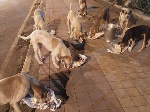 Help Covid-hit Dogs With Food, Medicines And Treatment