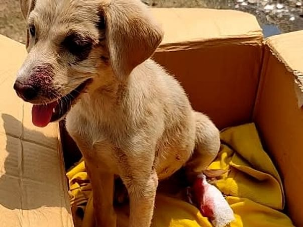 We R Raising Funds For Rescues, Food For Strays, Medicines Vaccination