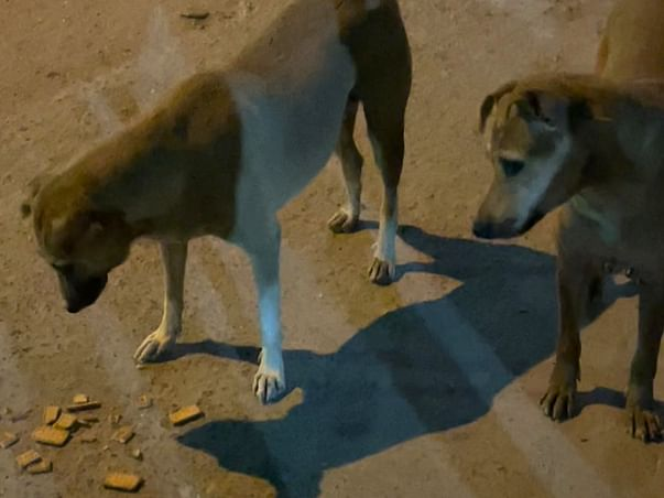 Need Your Help To Feed And Shelter For Street Animals