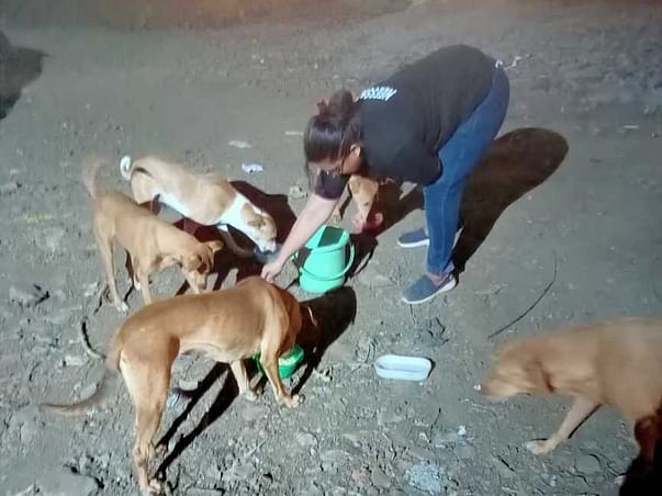 Support Me To Help Stray Dogs In Our Neighborhood
