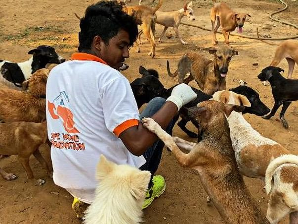 Help us to buy medical equipments to treat rescued stray dogs