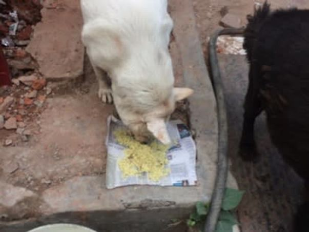 Help Feed Stray Dogs at Pvr Saket