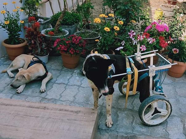 Samvedna Project For Animal Welfare