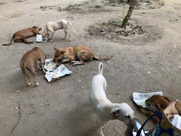 Support For Provide Shelter For Stray Animals