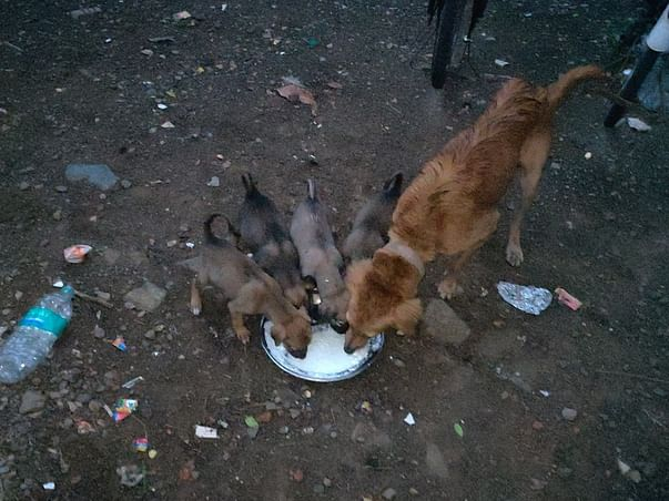 Help Us To Help Our Furry Friends.