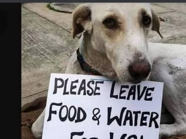 Donation For Animals Food