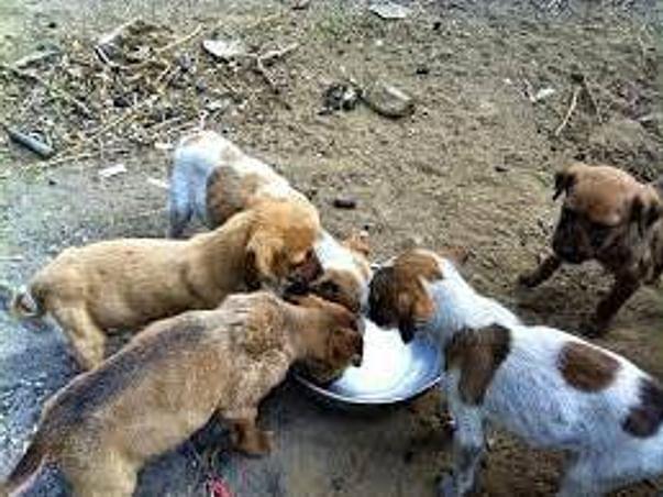 Support Feeding Street Dogs