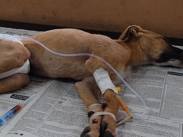 Help 6 Month Old Puppies Fight Gastroenteritis.