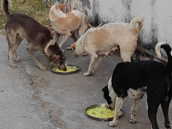 Help Rainbow Animal Aid Care For The Strays In Diu