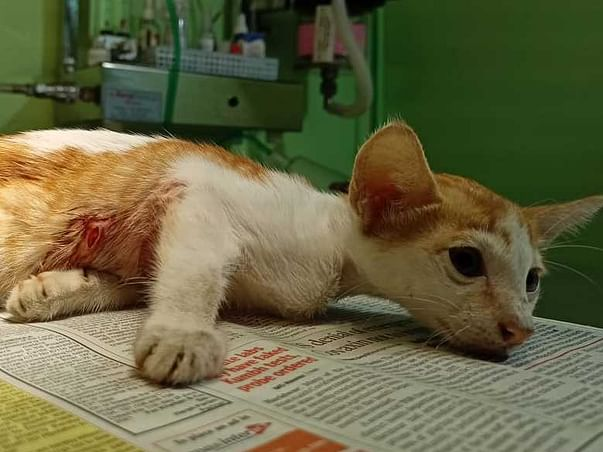 Help Strays_of_panvel in helping more voiceless animals 🐾