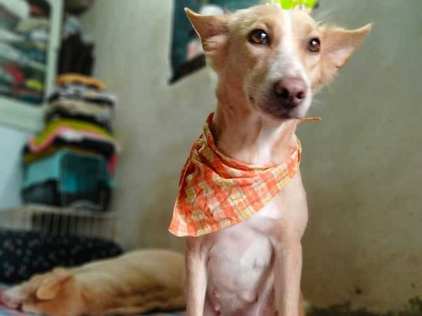 Help Chameli The Fighter Girl Get A Home !!!