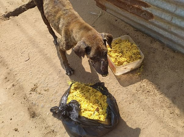 Help Me To Raise Fund For The Stray Animals