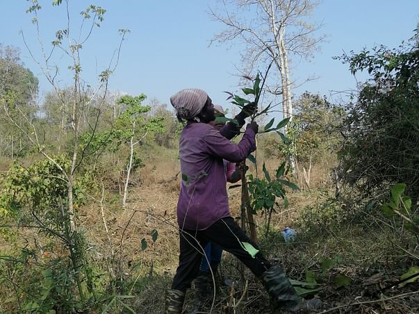 Support Livelihood of 20 Families through a 100-acre Eco-restoration