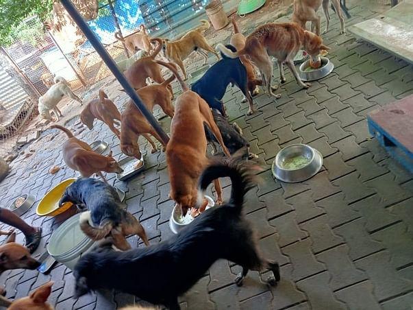 Sponsor Food, Medication & Shelter for 300+ Abandoned & Sick Dogs