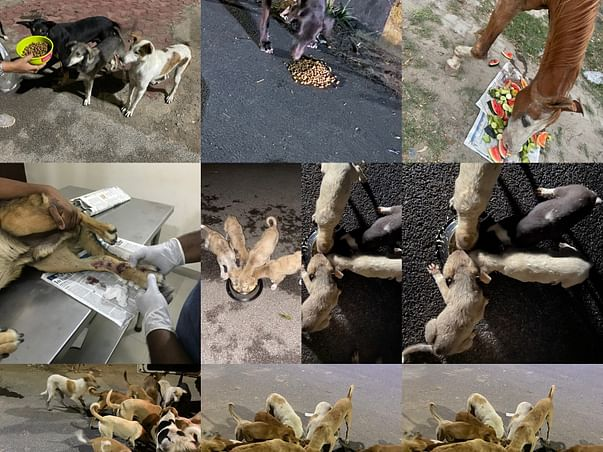 """""""NO ONE LEFT EHIND IS CAMPAIGN FOR HELP SAVE DISABLED ABUSED ANIMALS"""