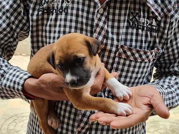 Please Help Us Build An Animal Shelter