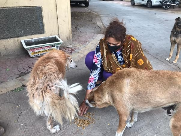 Dogs of Indore