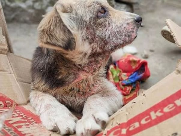 Support Me To Help Stray Dogs In Manali