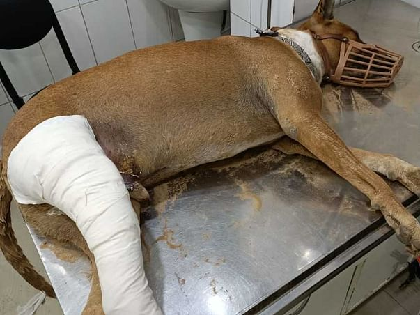 Help us ensure medical treatment for street dogs