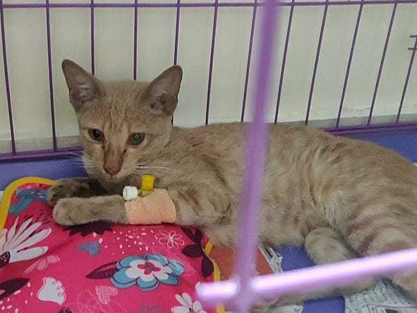 Help A Rescue Kitten To Recover From Injury, Dehydration and Anemia.