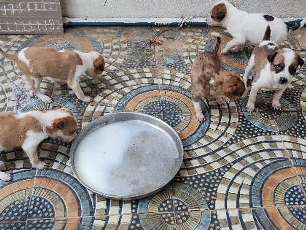 Help the stray dog to find a shelter and supplies