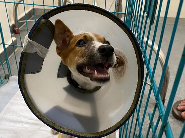 Contribute to Milo's Recovery!