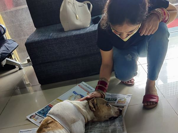 Help Tiger To Fight For His Life!