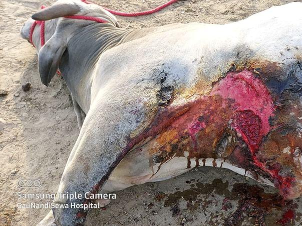 Help in Treatment of Acid attacked Gaumata and Nandi baba