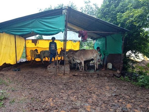 गौरक्षा - अनाथ गायोँ को बचाओ