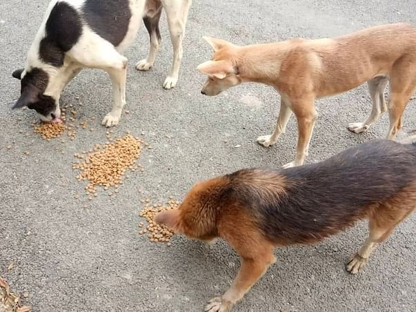 Help us feed maximum strays possible 🙏🐕