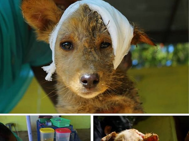 I am fundraising to animal Rescue(love them like you love your family)
