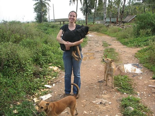 I am fundraising to help keep stray dogs fed and safe