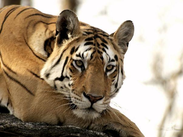 Save India's Wildlife!
