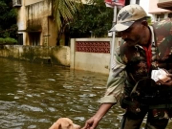 Help the stranded pets to find food and shelter during this tamilnadu flood