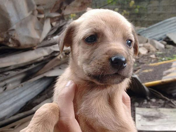Help Me Save The Puppies