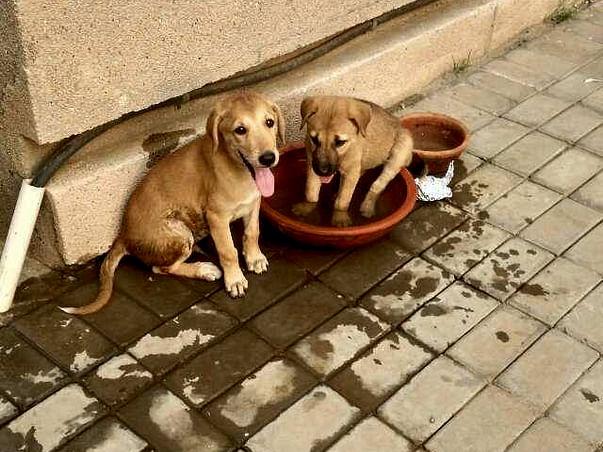 Help Stray & Abandoned Animals