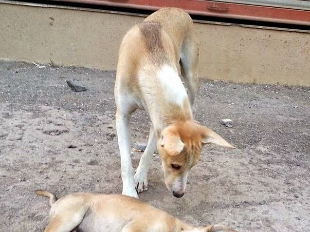 Help Speechless Animals