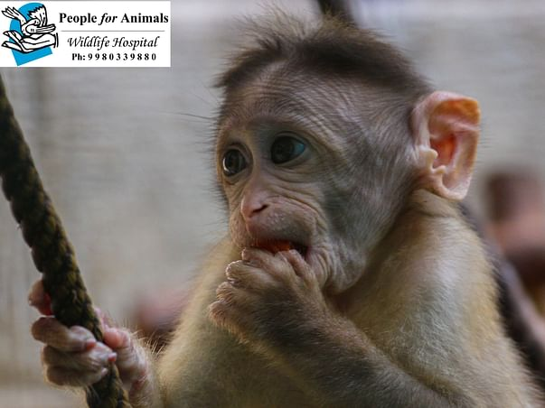 These macaques needs your help for a healthy future
