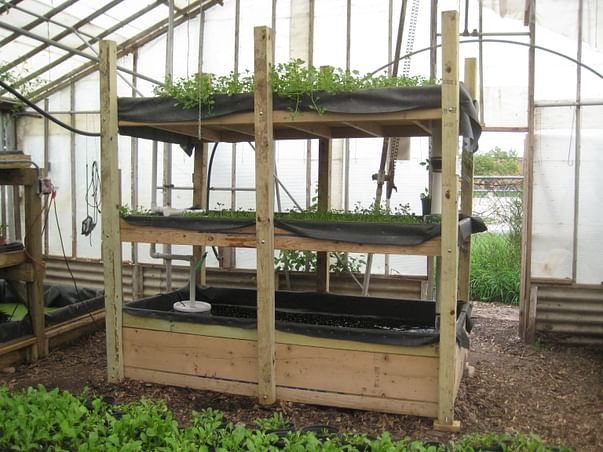 Aquaponics - new way of organic agriculture to relieve farm stress